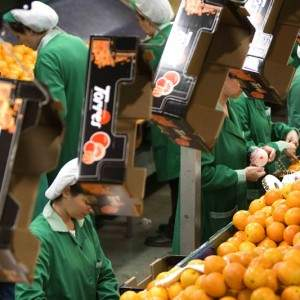 Naranjas-Torres-instalacion