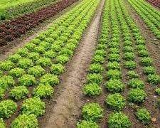 sector hortofrutícola murciano