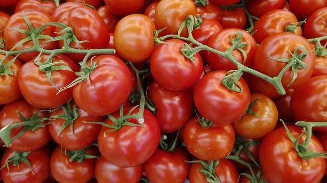 tomate consumo