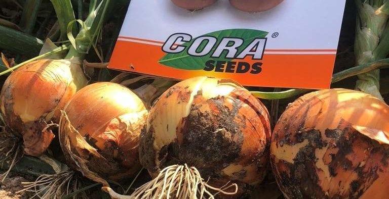 Cora Seeds