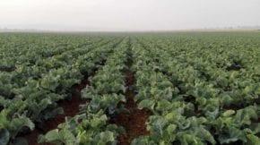 Kettle Produce España