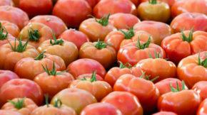 tomate virus Turquía