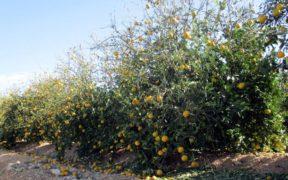 agricultura valenciana