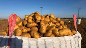 Patatas Beltrán