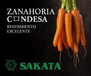 banner_sakata_condesa