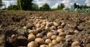 consumo frutas hortalizas movilidad