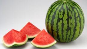 melón sandía tendencias