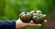 Grupo Agroponiente