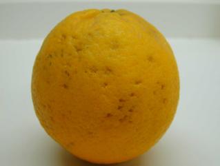 citrosol cítricos