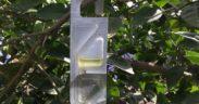 Bayer cotonet cítricos