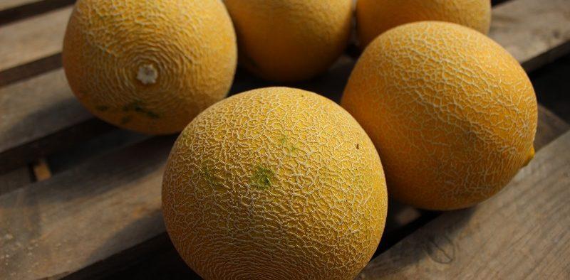 Semillas Fitó melón