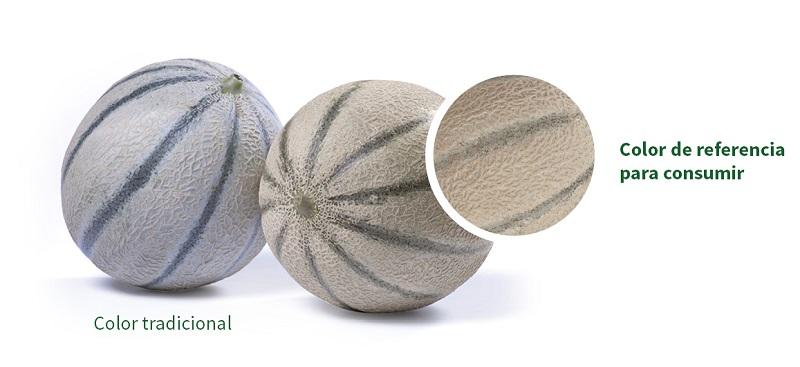 Rijk Zwaan melón