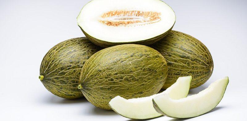 Syngenta melón