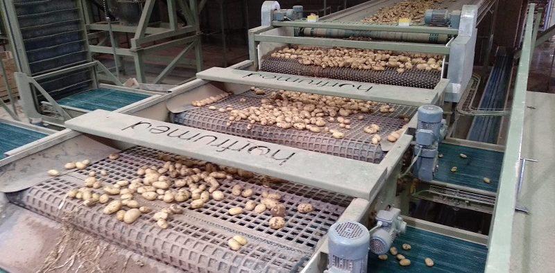 Horfrumed patata maquinaria