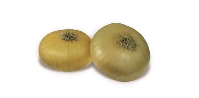 Seminis cebolla