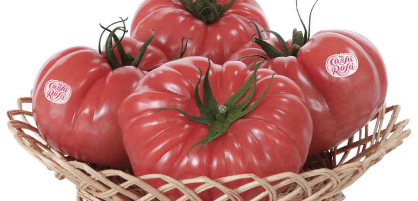 grupo agroponiente tomate sabor