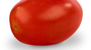 Semillas Fitó tomate