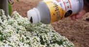 control biológico Agrobío pepino