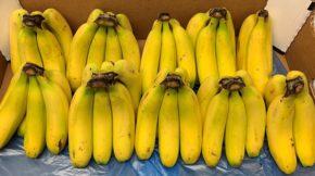 Sanifruit plátano banana