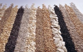 Camposeven Vitalis semilla ecológica