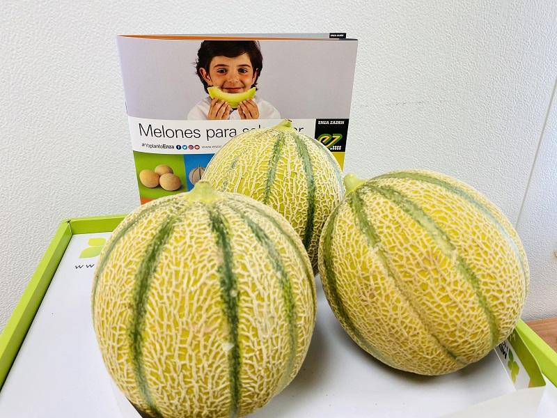 melón Enza Zaden