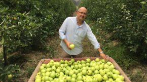 IGP Poma Girona manzana