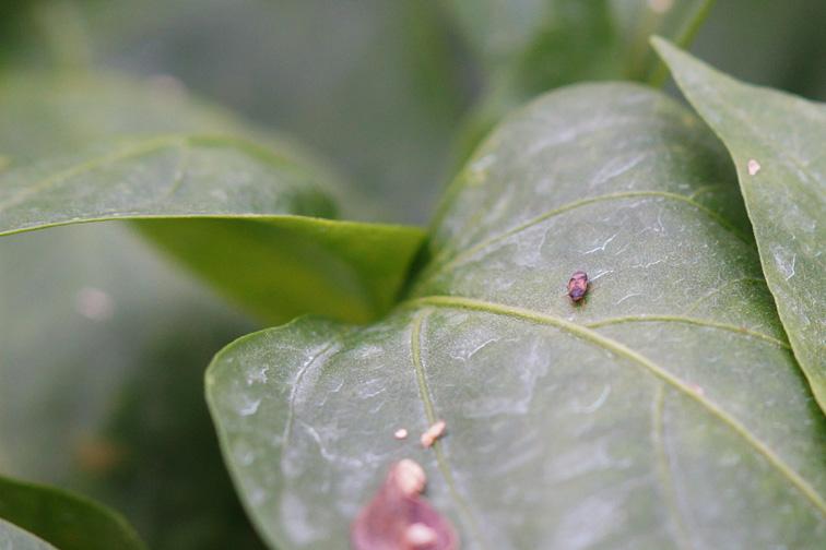 Agrobío control biológico semilleros