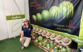 Syngenta melón Murcia
