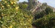 Toñifruit limón Librilla