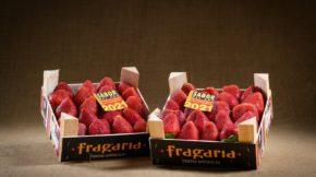 Fruits Rafols Fruit Attraction Sabor del Año