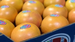 San Cayetano Fruit Attraction