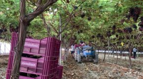 uvasdoce Fruit Attraction